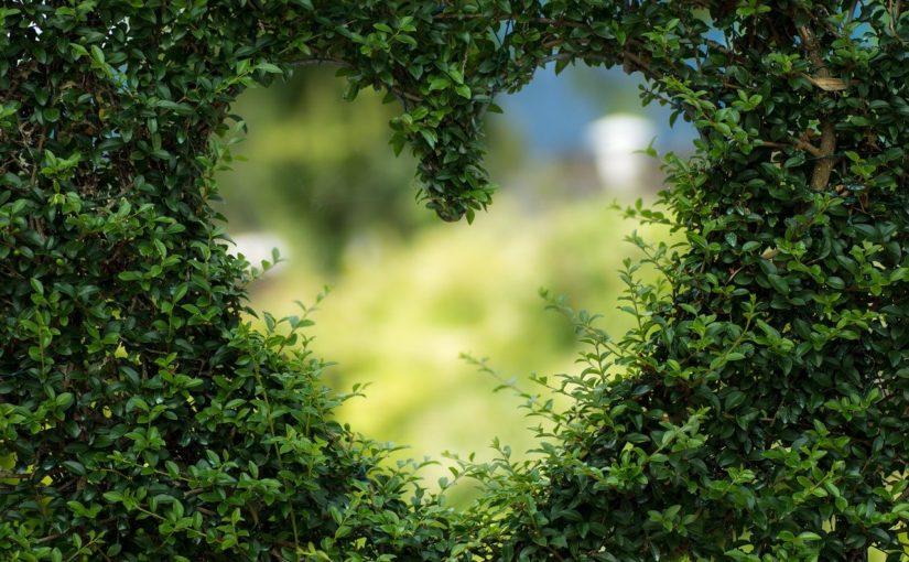 Piękny oraz ładny ogród to zasługa wielu godzin spędzonych  w jego zaciszu w toku pielegnacji.